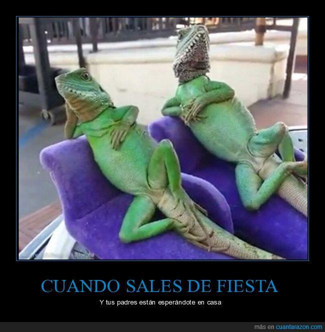 esperar,iguana,llegar tarde,padres