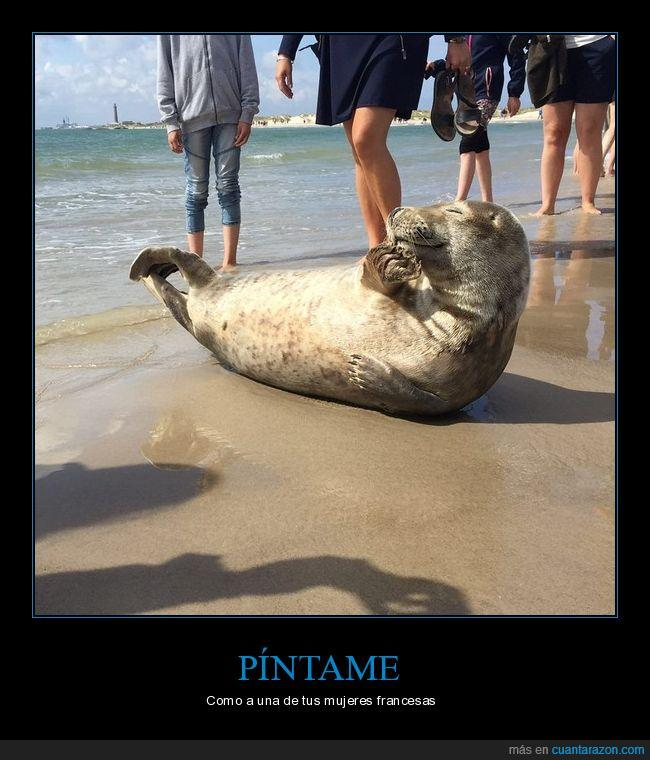 foca,playa,posar