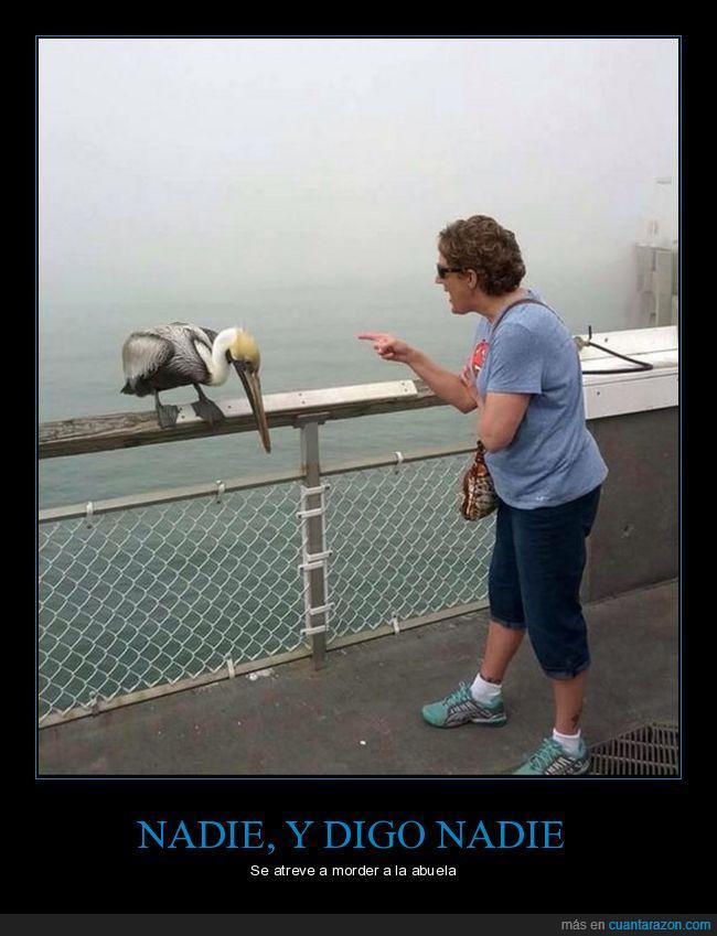 ave,bronca,castigo,pájaro