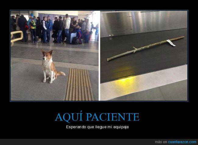 aeropuerto,cinta,palo,perro
