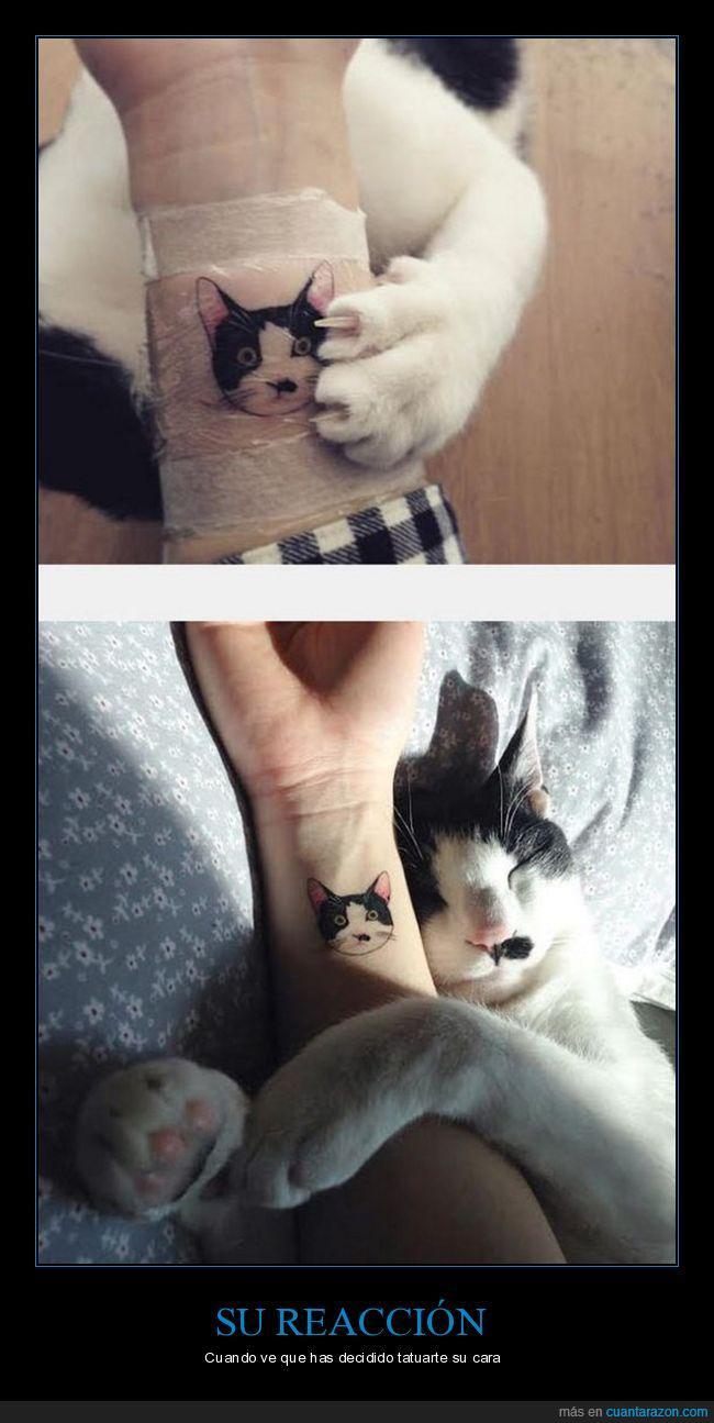 gato,reacción,tatuaje