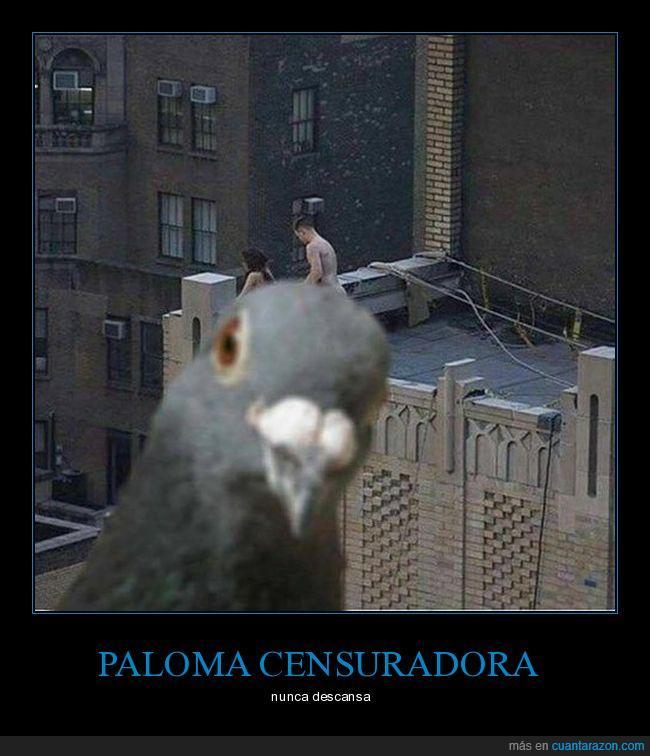 ave,desnudos,edificios,paloma