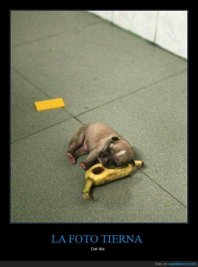 banano,cachorro,can,perro,plàtano