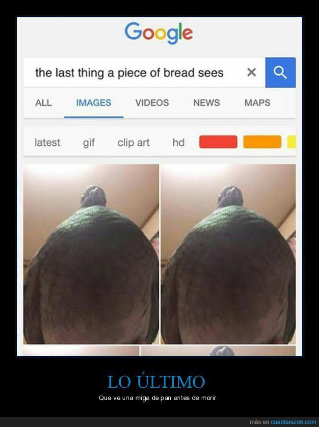desde abajo,miga de pan,paloma