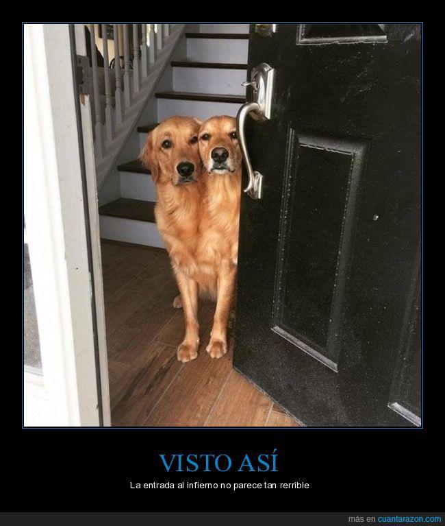 dos cabezas,perro,puerta