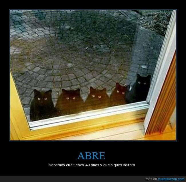 abre,gatos,loca de los gatos,puerta