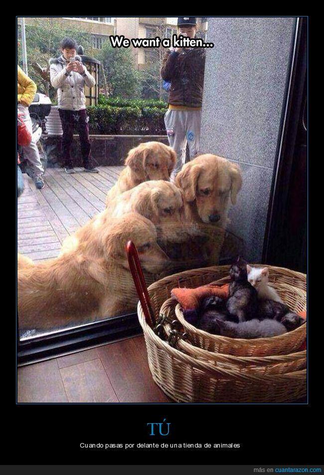 cristal,gatos,perros,querer,tienda