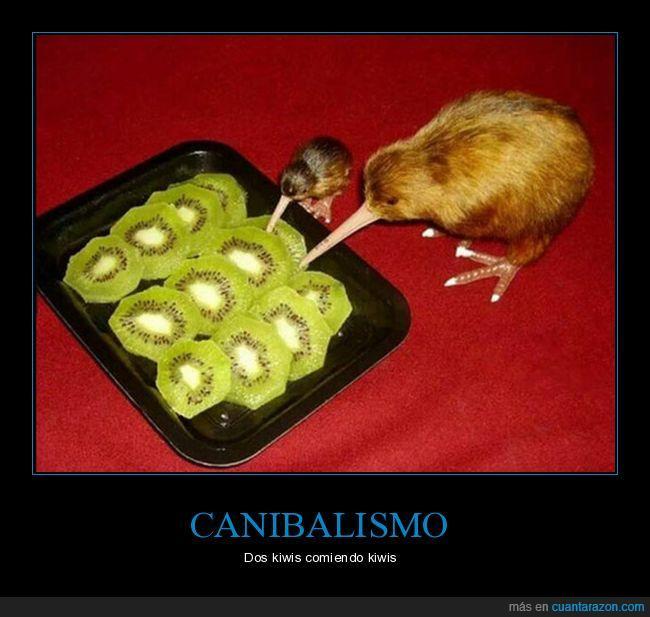 animal,fruta,kiwi