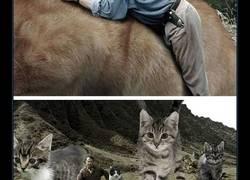 Enlace a Si los dinosaurios de Jurassic Park fueran adorables y achuchables gatitos