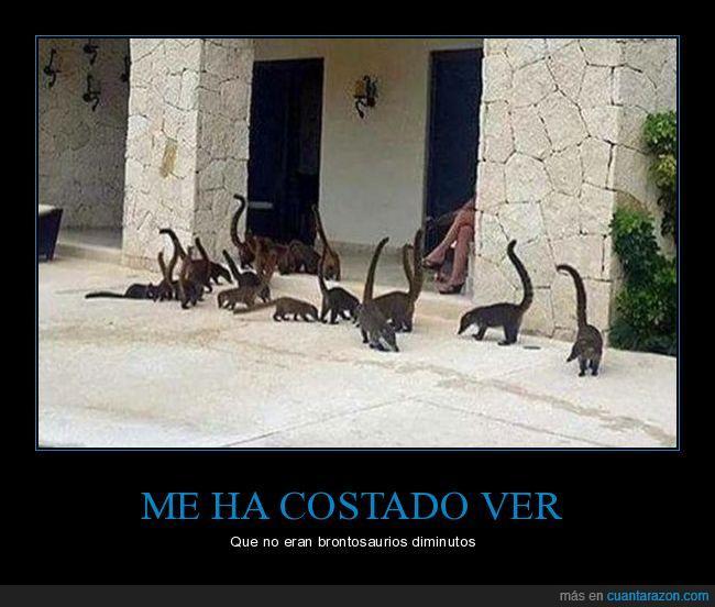 animales,brontosaurios,diminutos,dinosaurios,wtf