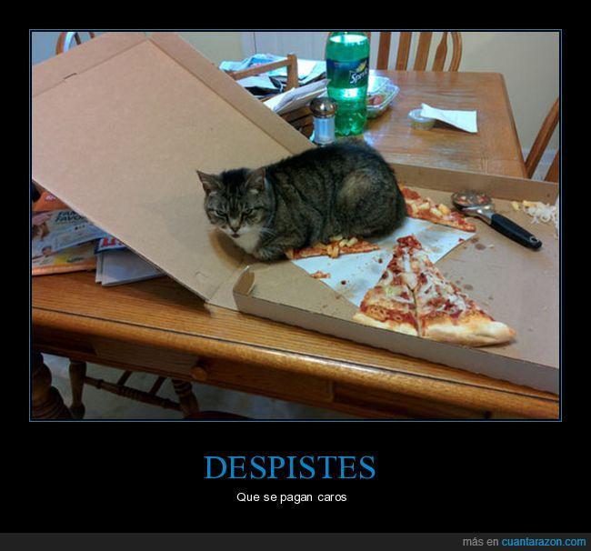 caja,gato,pizza