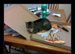 Enlace a Olvidé de cerrar la caja de pizza por la noche