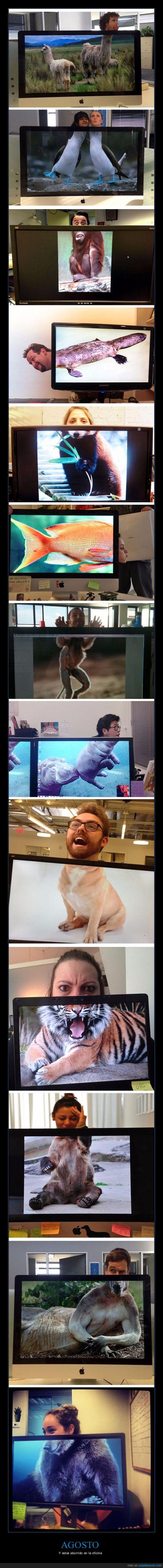 animales,cabezas,oficina,pantallas