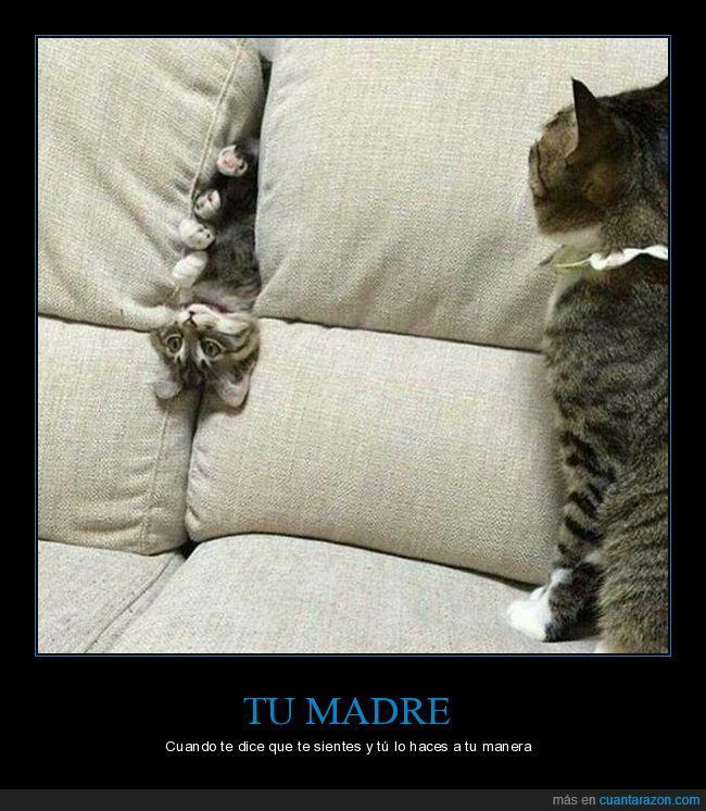 gatos,sentarse,sofá