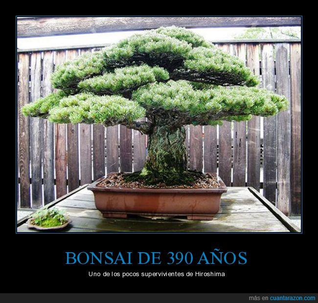 bonsai,hiroshima,superviviente