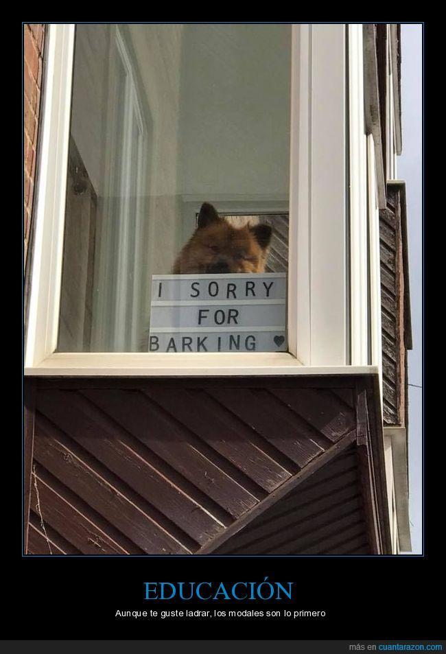 disculpas,ladrar,perro,sorry
