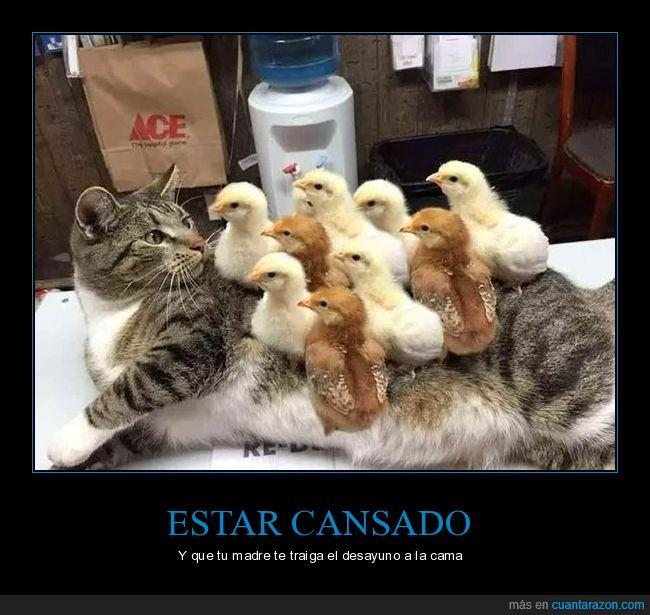 gato,pollitos