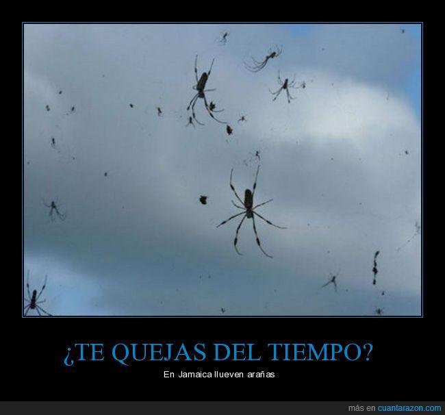 arañas,jamaica,tiempo