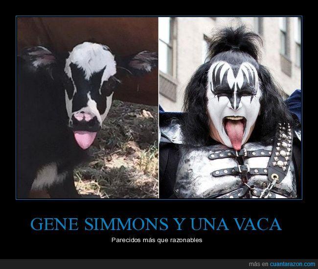 gene simmons,parecidos razonables,vaca