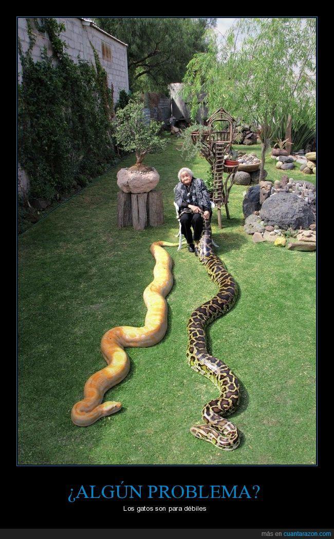 abuela,mascotas,serpientes