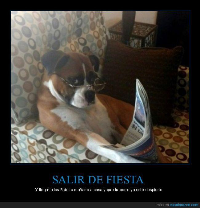 esperar,periódico,perro,salir de fiesta