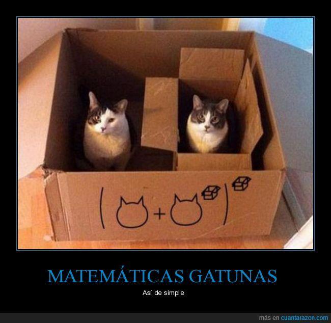 al cuadrado,caja,gato