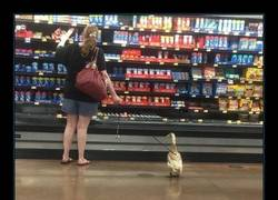 Enlace a Pobre pato, esto es mala leche