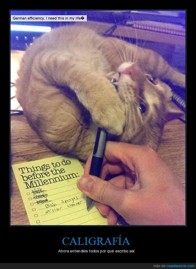 caligrafía,escribir,gato,molestar