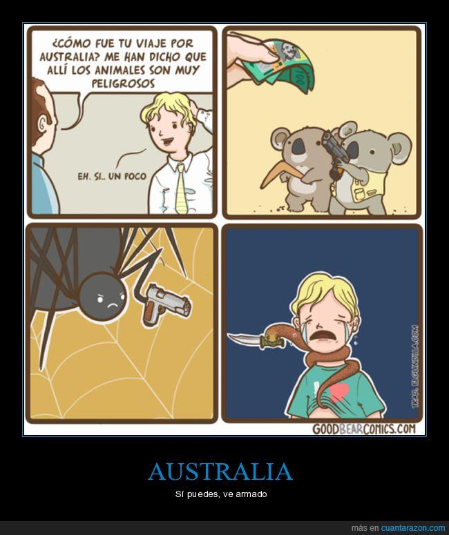 arañas,australia,koalas