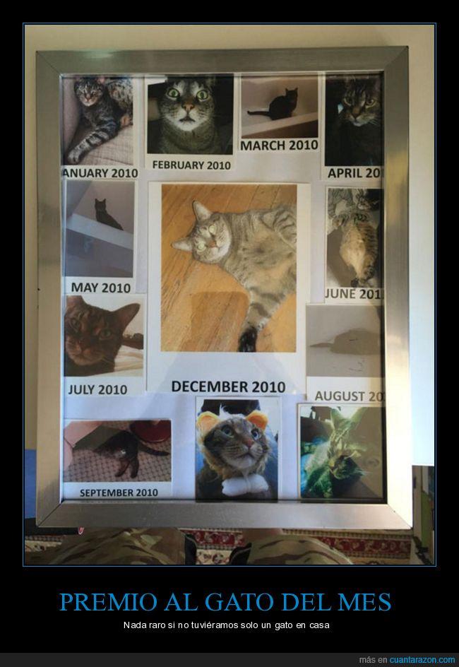 casa,galardón,gato del mes,premio