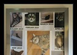 Enlace a Mi mujer entrega el premio al gato del mes en casa. Solo tenemos un gato