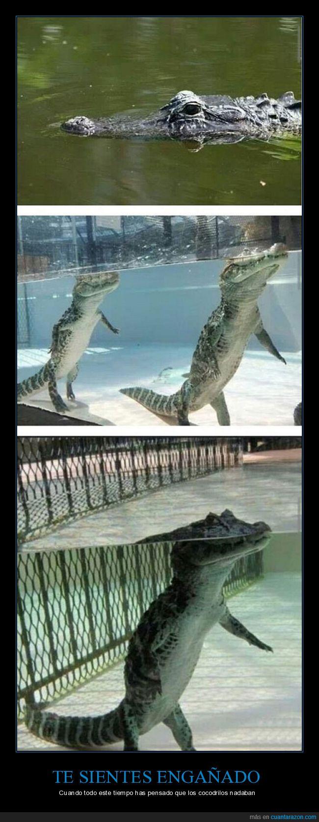 agua,andar,cocodrilo,piscina