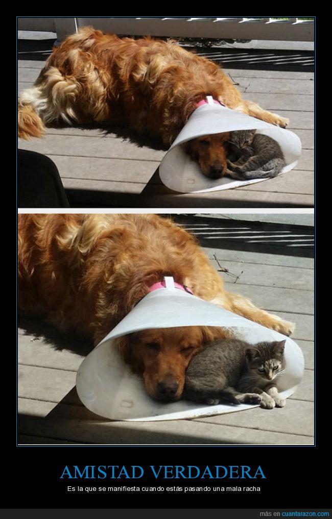 amistad,cono,enfermo,gato,perro