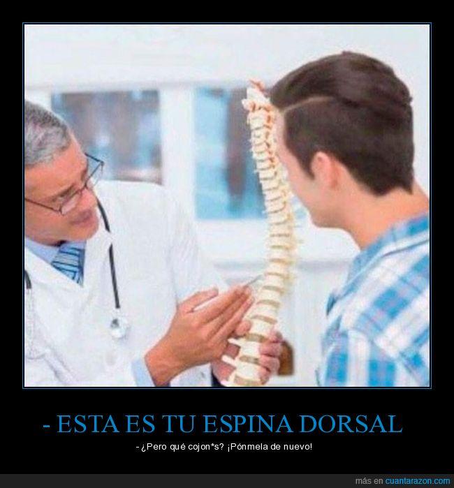 doctor,espina dorsal,explicación