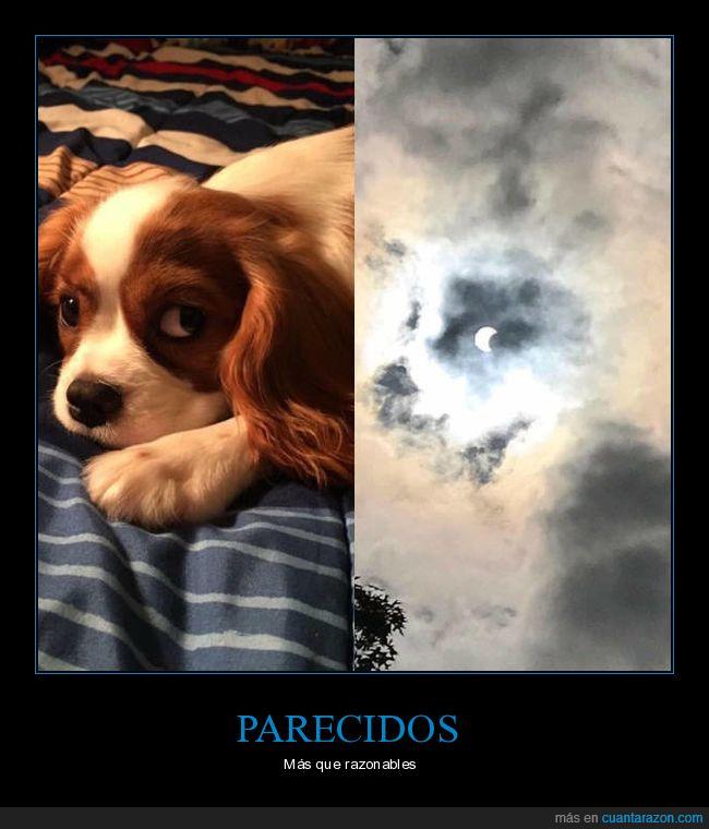 cachorros,eclipse,mirada,perro