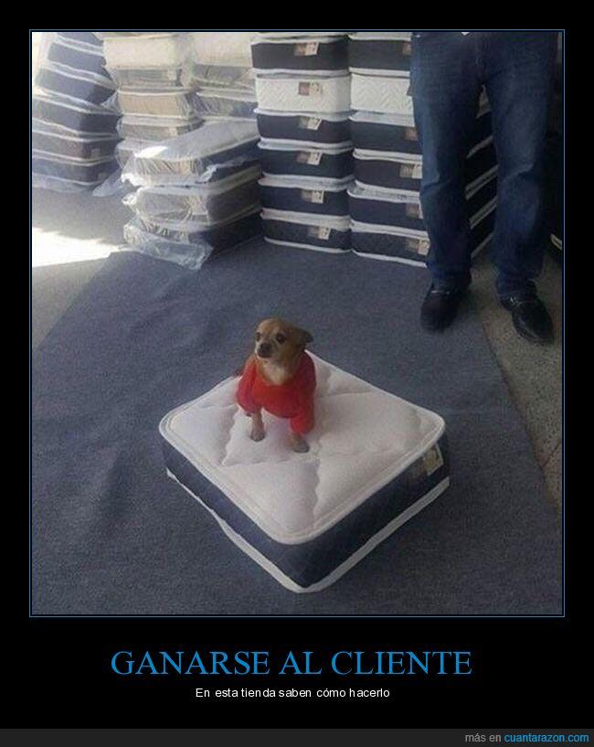 colchón,mini,perro