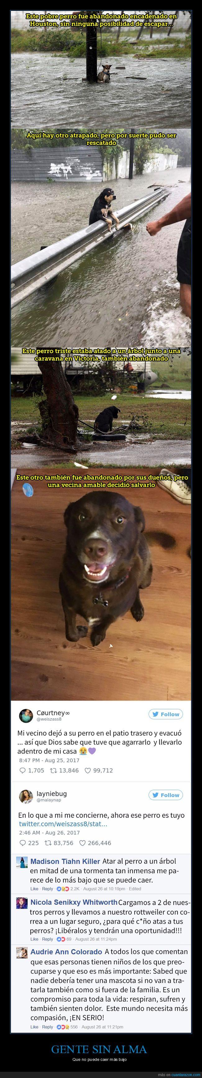 desalmados,inundación,mascotas,texas