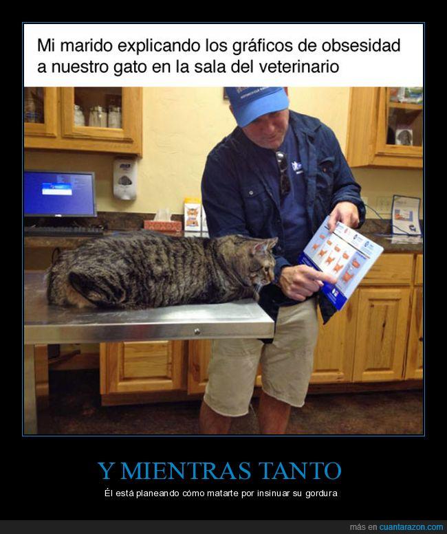 gato,gordo,veterinario