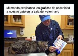 Enlace a Explicando la obesidad a un gatito