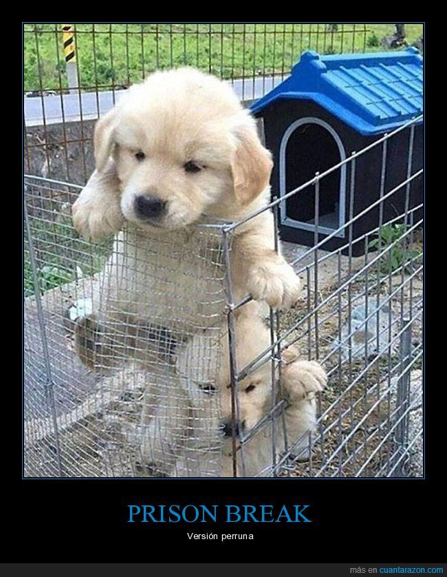 escapar,jaula,perros
