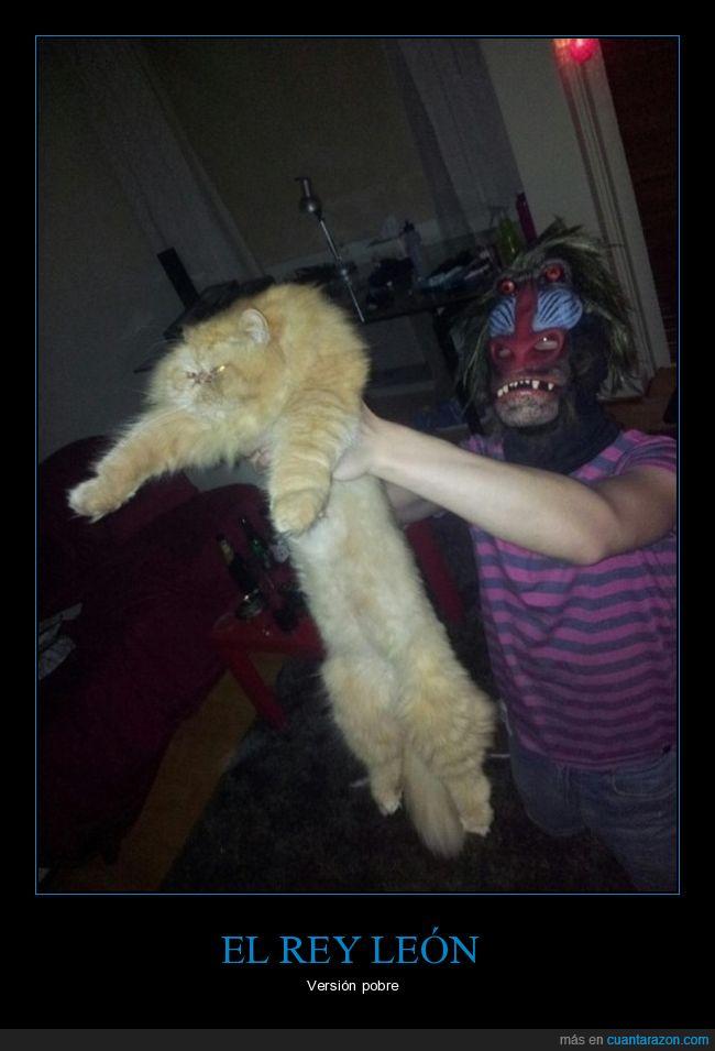 elegancia,félido,felino,fotografía,gato,película.rey león