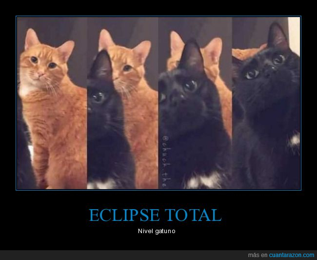 eclipse,gatos