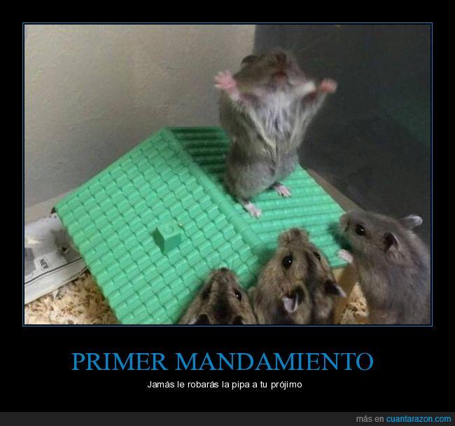hamsters,mandamiento,pipa