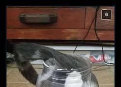 Enlace a Gatos