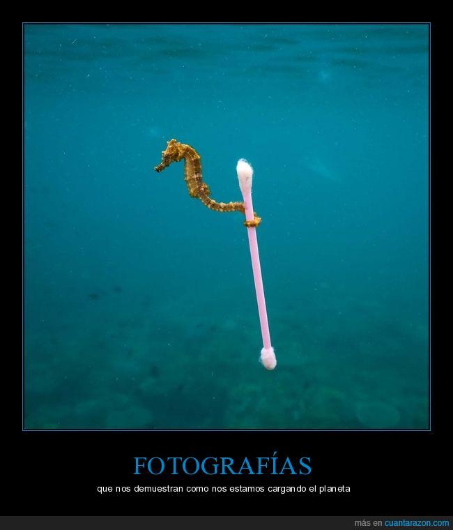 caballito,mar,planeta