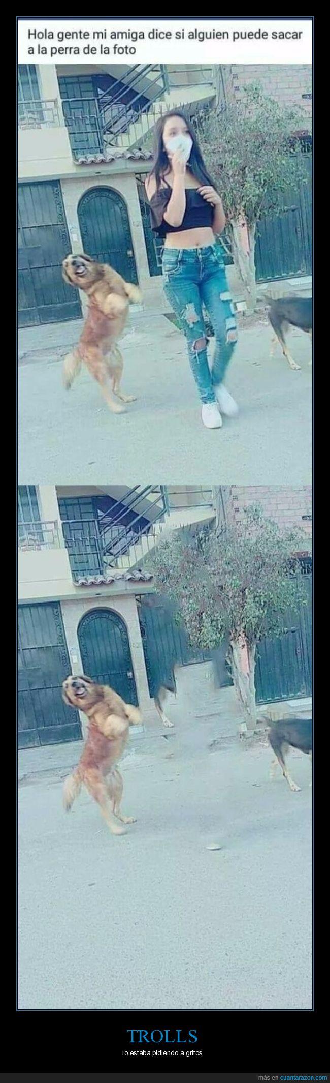 foto,perra,photoshop,retoque