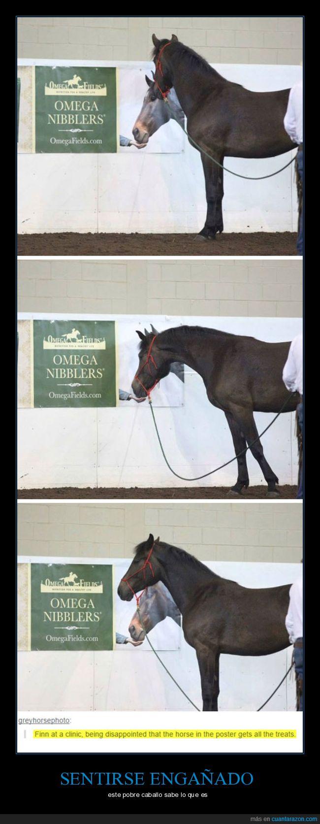 caballo,cartel,comida