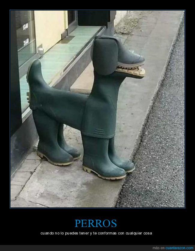 botas,perro