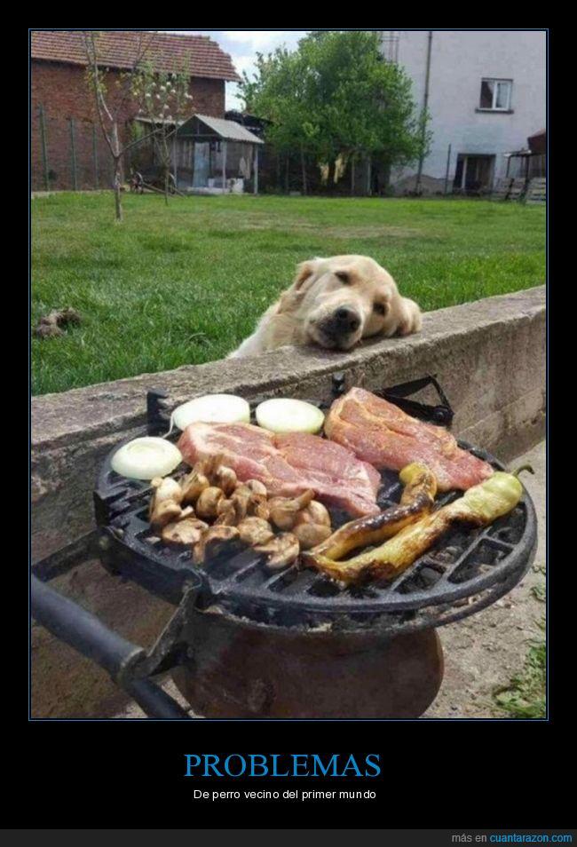 barbacoa,comida,perros,vecino