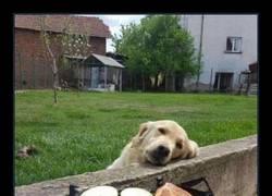 Enlace a Problemas de perro vecino del primer mundo